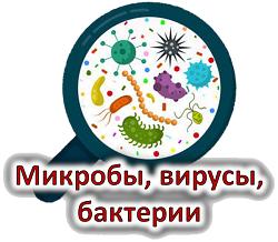 Викторина «Микробы, вирусы, бактерии»